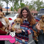 23-elk-grove-chihuahua-terrier-6-puppies-9-months-old-free-to-give-out-916-690-5596