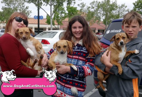 GOOD DOGS TO GOOD HOMES IN ELK GROVE AREA!