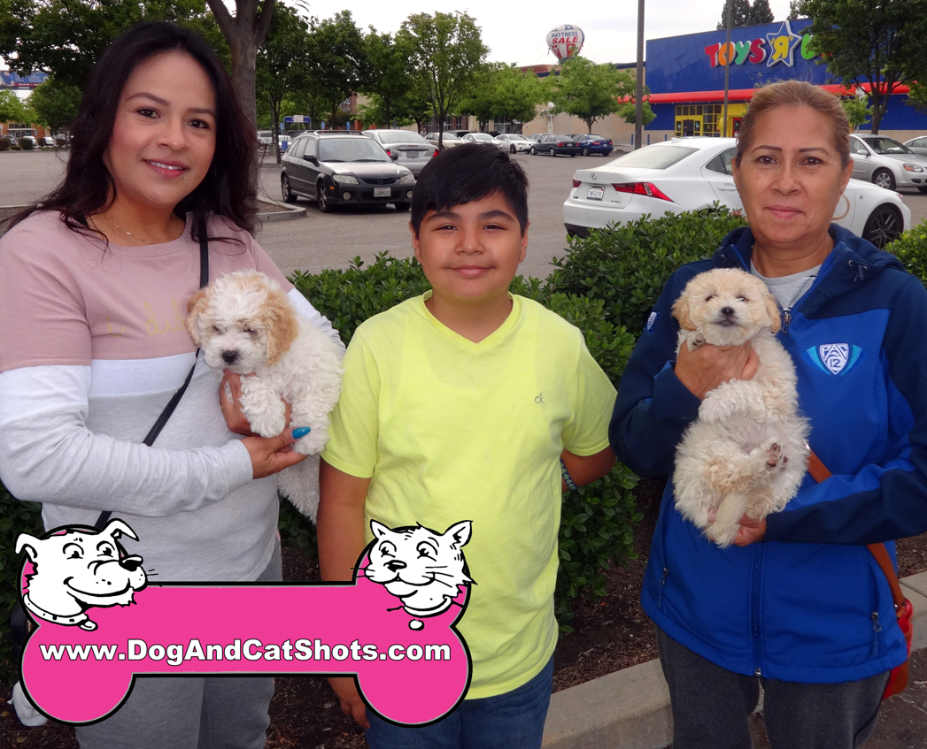 Chloe The Poodle and Friends Visited Our Stockton Clinic