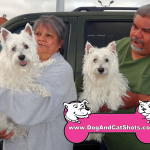 12-south-sacramento-west-highland-terrier-pinky-sparky