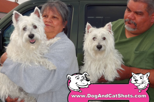 Pinky and Sparky the Westhighland White Terriers Visited us in South Sacramento