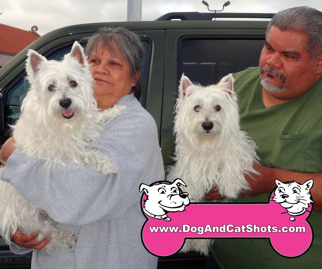 12-south-sacramento-west-highland-terrier-pinky-sparky