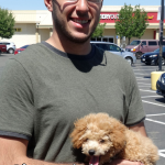 13-rancho-cordova-mini-poodle-molly