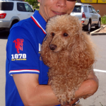 15-rocklin-roseville-mini-apricot-poodle-rusty