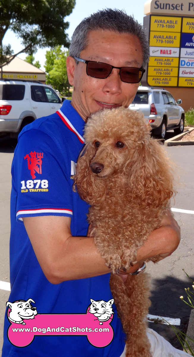 Rusty The Miniature Poodle visited Us In Rocklin