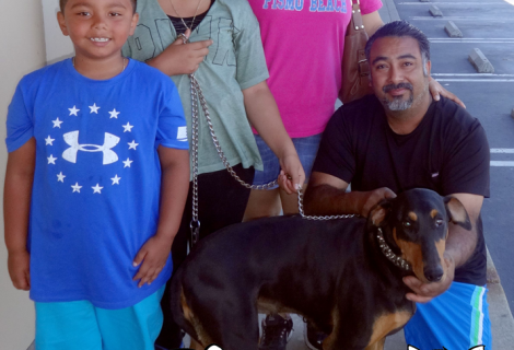 Shelby the Doberman Pinscher and His Family Visited Our Antioch Location