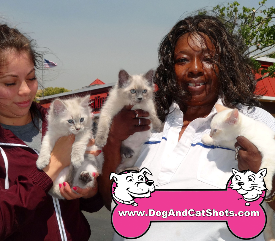10-vallejo-american-canyon-fairfield-3-free-kittens-707-816-6014