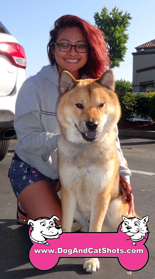 Ronin the Akita Mix Visited us in Elk Grove