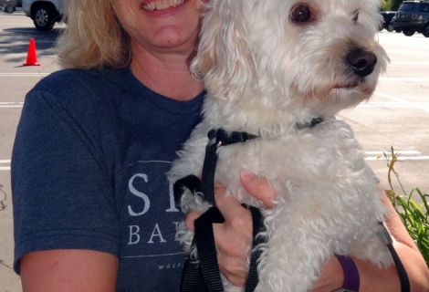 Charlie the Maltese – Poodle Visited Our Folsom Clinic