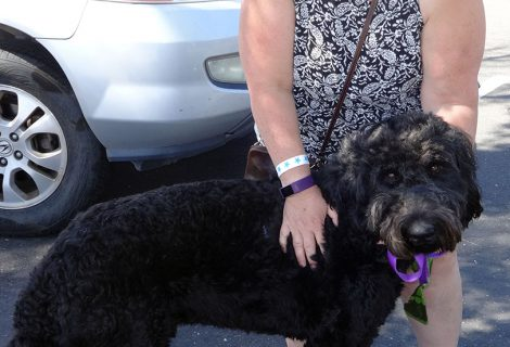 Max the Giant Schnauzer Visited us in Carmichael