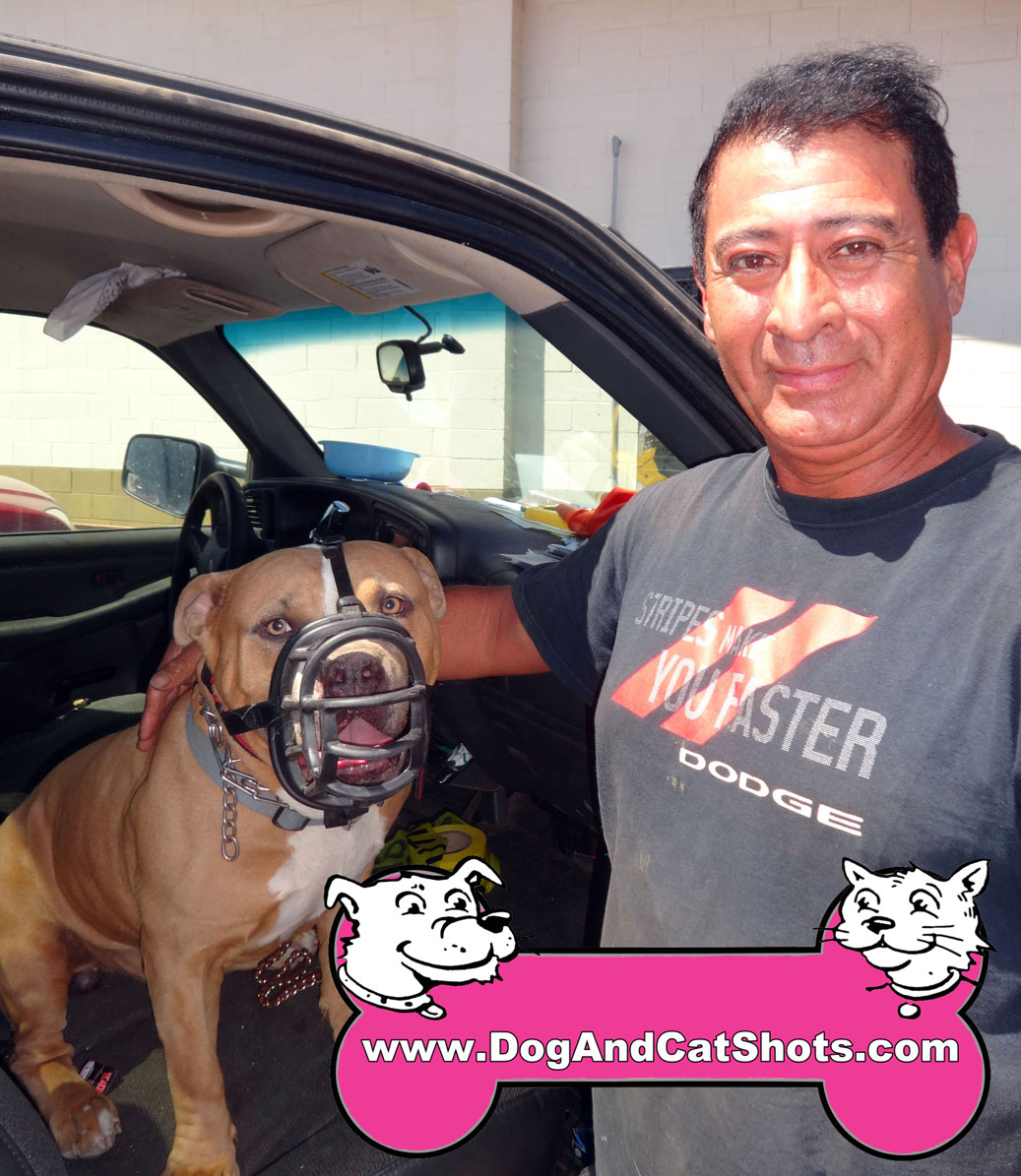 Low Cost Dog And Cat Shots In Northern California King The Bull Terrier Visited Us In Atwater