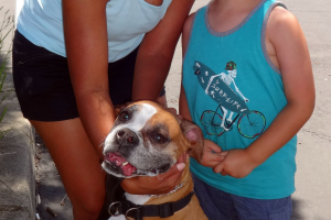 Gracie the Boxer Visited us in Rocklin/Roseville
