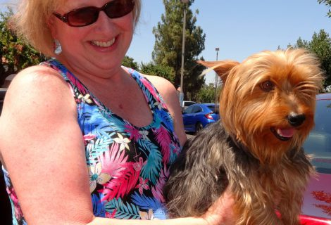 Australian Yorkshire Terrier Max Visited us in Modesto