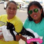 18-manteca-domestic-short-hair-cats-sky-cosmo