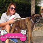 19-dixon-boxer-from-nor-cal-boxer-rescue-willie