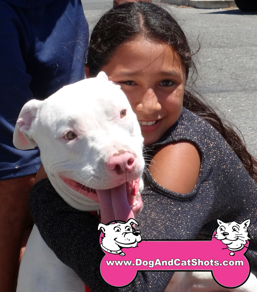Piglet the Pitbull Visited us in West Sacramento