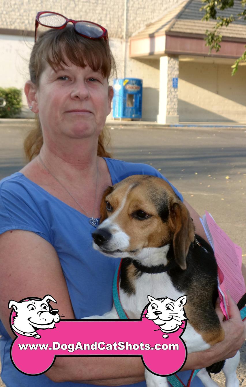 31-woodland-beagle-cooper