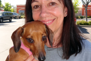 Cali the Mini Doxie Visited Our Folsom Clinic
