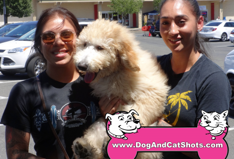 Bella The Goldendoodle Visited us in Rancho Cordova