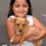 12-atwater-chihuahua-chico