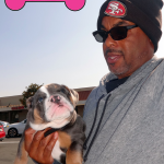 18-vallejo-american-canyon-english-bulldog-max