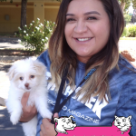 19-brentwood-maltese-mix-nube