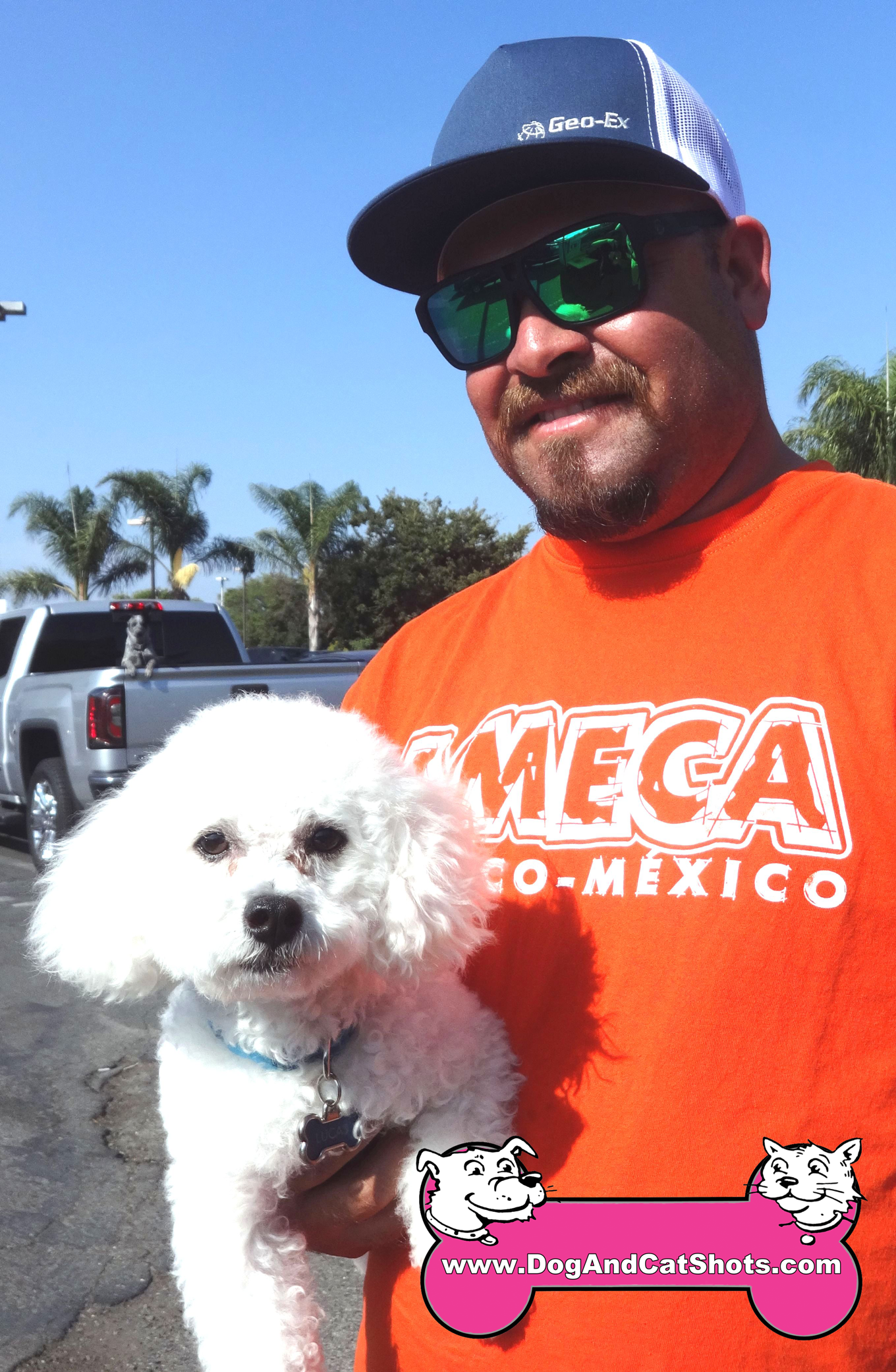 Lucas the Bichon Frise Visited us in Dixon