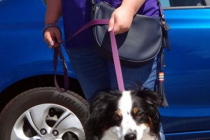 Lilly the Miniature Australian Shepherd Visited our Vacaville Clinic