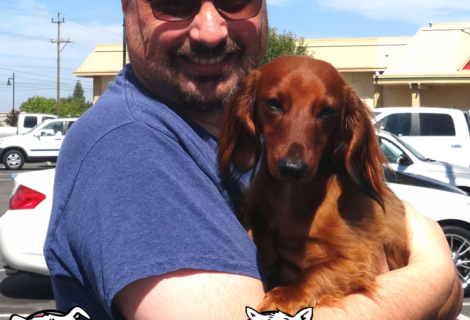 Gizmo the Dachshund Visited us in Rancho Cordova