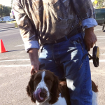 12-ceres-springer-spaniel-pinto-we-took-pic-of-this-dog-a-1-6-years-ago-as-apuppy-she-now-has-8-puppies
