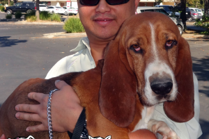 Droopy The basset Hound Visited us in Brentwood