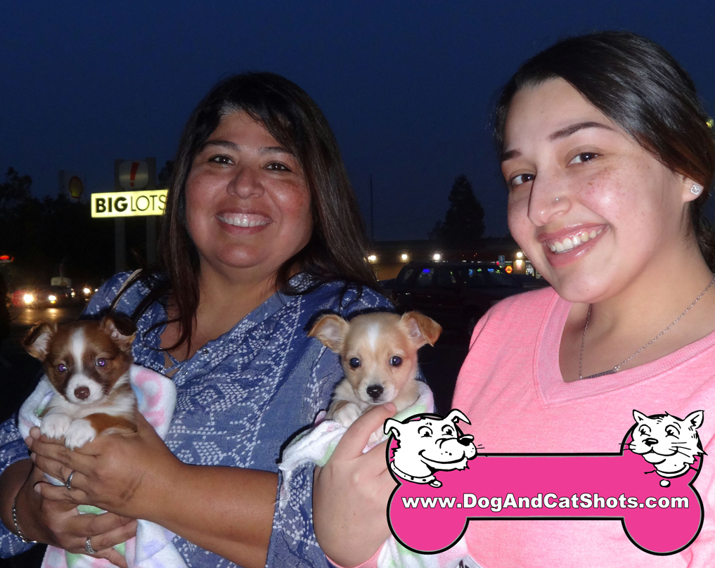 Coco and Chanel the Chihuahua duo Visited us in Stockton