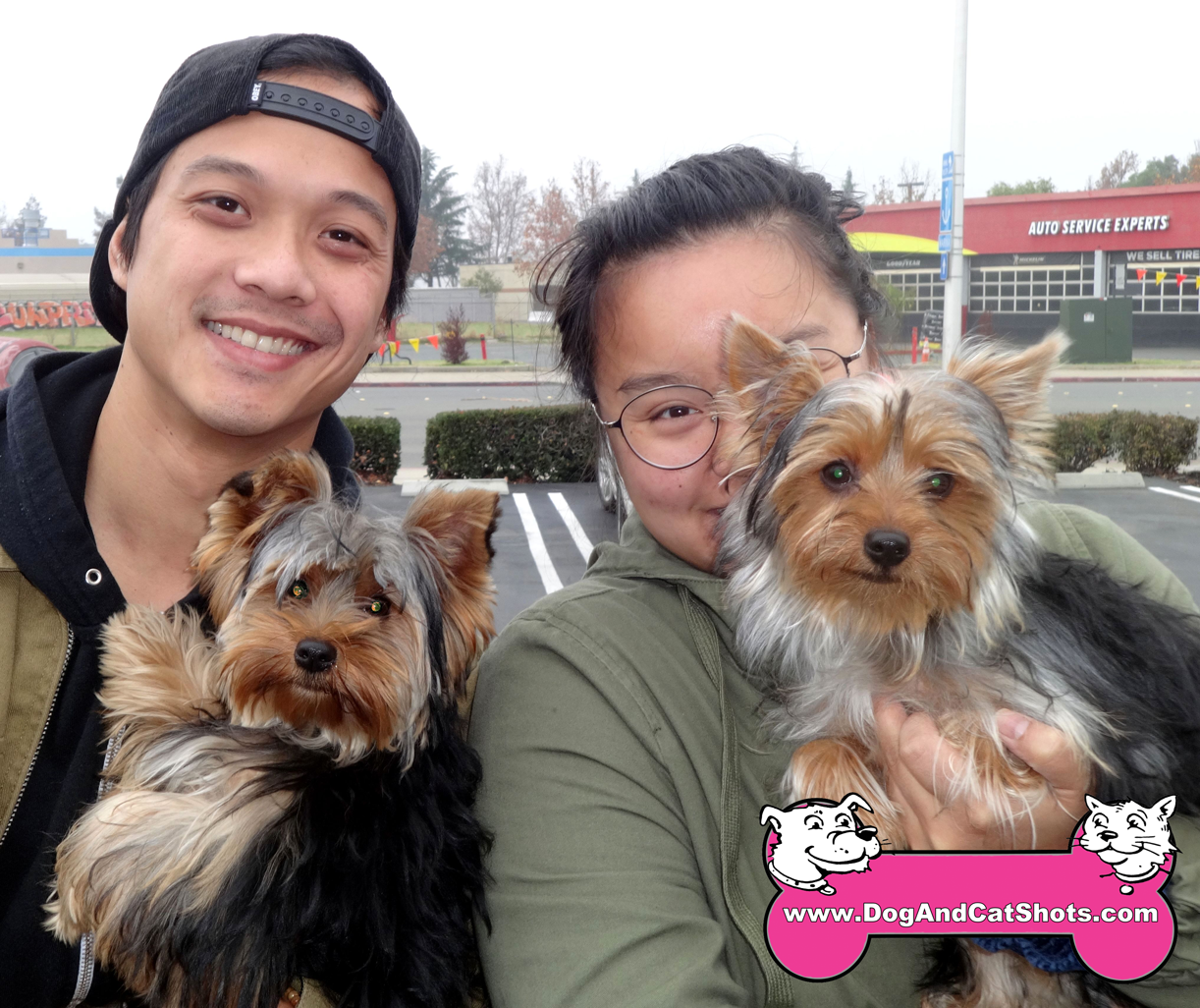 Spaghetti and Meatball The Yorkshire Terriers Visited Our Antioch Vaccination Clinic