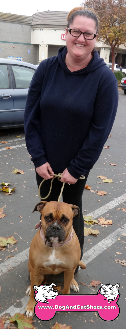 13-brentwood-boxer-english-mastiff-lucy