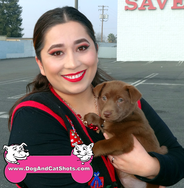 Chocolate Lab Puppy Visited Our Turlock Clinic