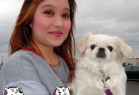 Ponyo the Pekingese Visited us in Rancho Cordova
