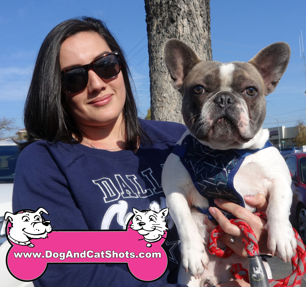 Mister the French Bulldog visited us in Modesto