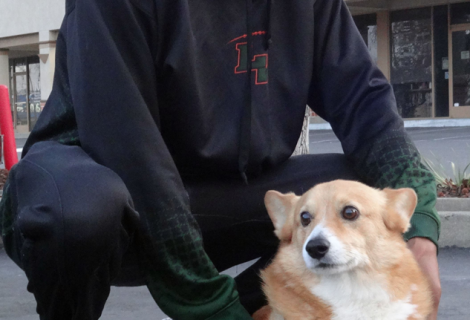 Rudy the Corgi Visited us in Elk Grove