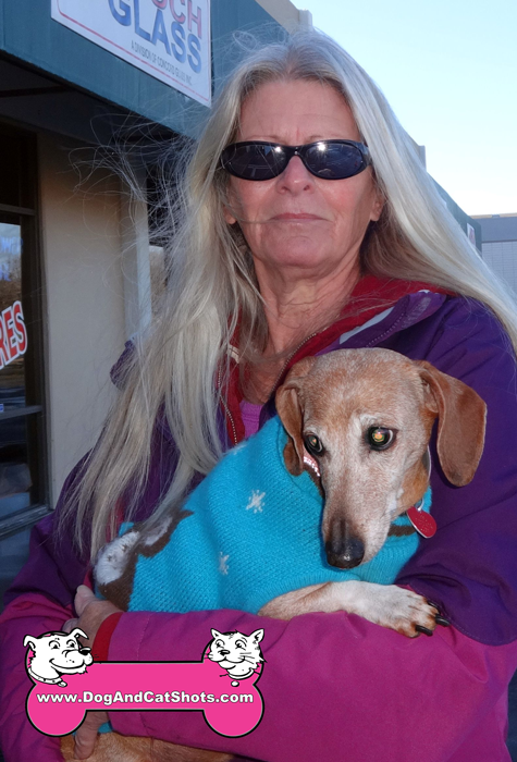 Susie The Dachshund Visited us in Antioch