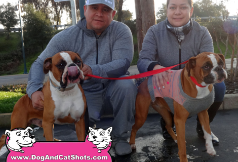 Lucas and Daisy the Boxer Duo Visited us in Lodi