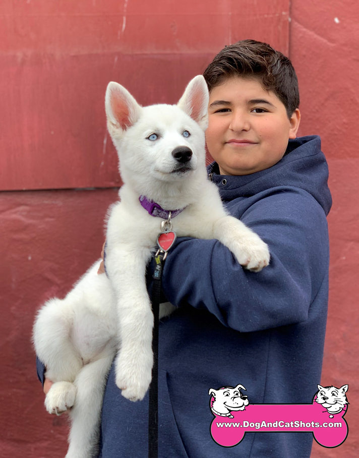 Estrella the Siberian Husky Pup Visited us in Tracy