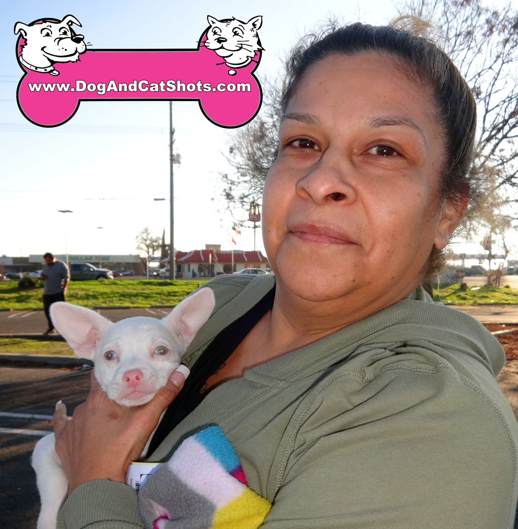 4-ceres-albino-chihuahua-both-parents-are-black-wilbert