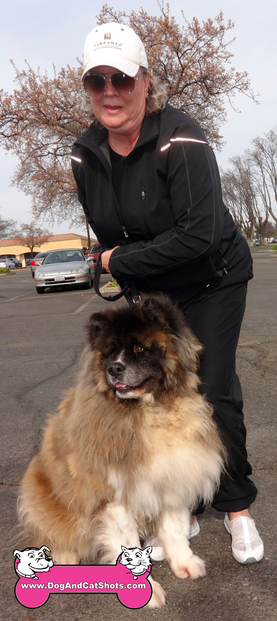 Buddah the Akita Visited us in Roseville/Citrus Heights