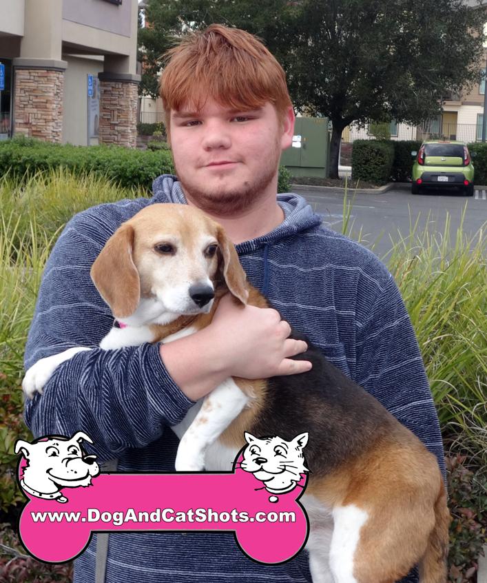 13-folsom-beagle-chloe