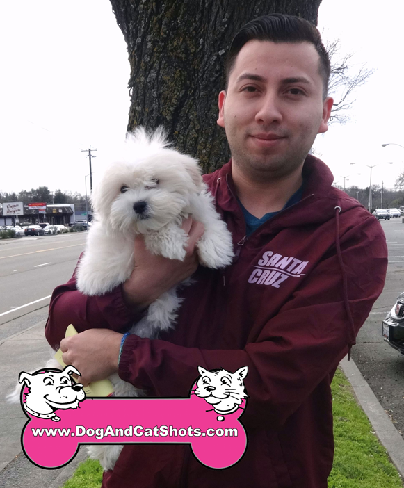 17-citrus-heights-roseville-shih-tzu-beau