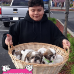 20-pittsburg-shih-tzu-puppies-for-sale-9256984394