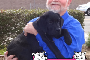 Roxy the Labrador Retriever Visited us in Brentwood