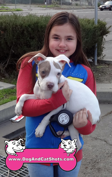 8-woodland-pit-bull-mix-jaxx