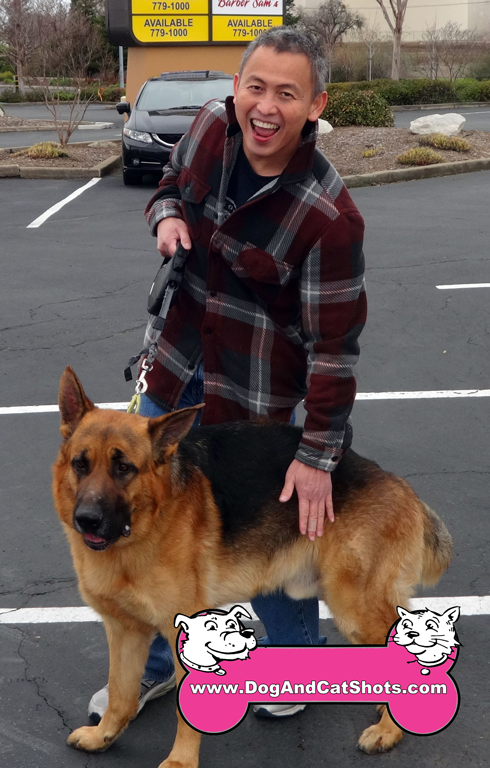 9-rocklin-german-shepherd-jude-vestal