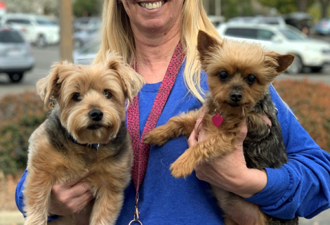 Yorkshire Terriers Tobie and Miley came to Roseville